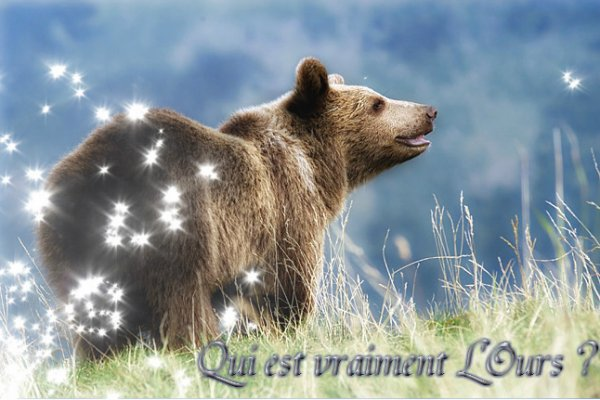 Un Ours, c'est quoi ? 
